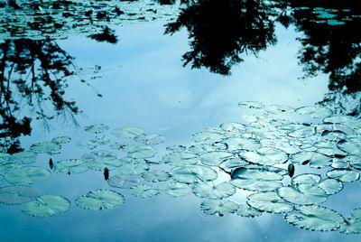 Hydra Blue Water Dye 28 Oz